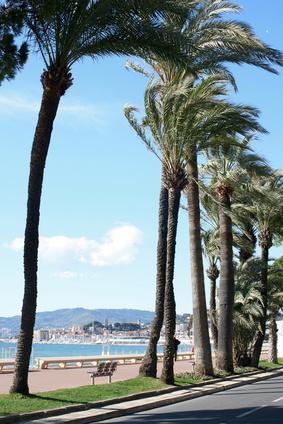 Cannes : un festival de cuisine