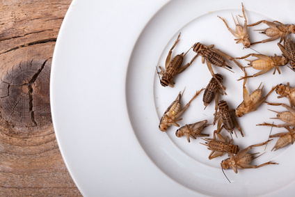 Manger des insectes ? Non !