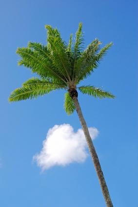Huile de palme : pas mieux que les huiles hydrogénées !