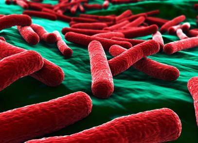Bactérie E.coli : les médecins craquent !