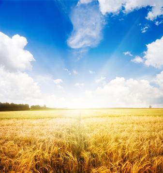 Les céréales complètes réduisent de 20% le risque de cancer colorectal