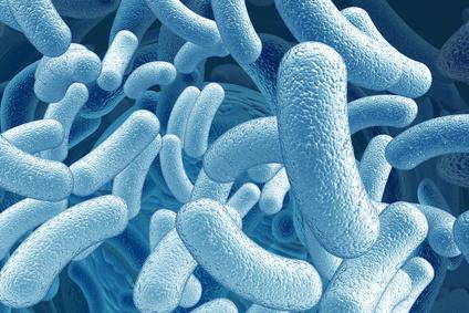 Les probiotiques réduiraient le stress
