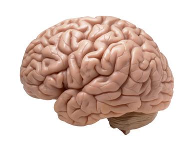 Le régime serait bon pour le cerveau !