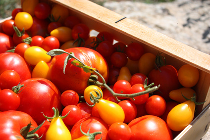 Des petites tomates sur le balcon