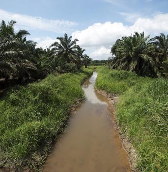 L'huile de Palme est-elle dangereuse ?